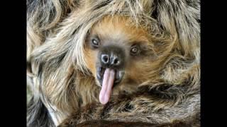 лучшие фотографии мира животных