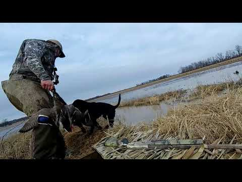 Arkansas Duck Hunting With The Remington V3
