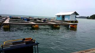 Sea Fish farming indonesia - jan 2015