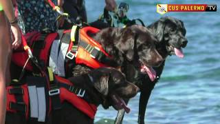 Labrador da salvataggio e YouDive Grande successo alla Baia del Corallo