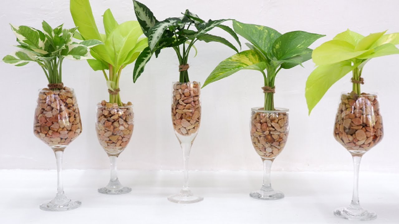 How to Grow and Decorate 5 Houseplants Single Leaf Cuttings in Wine Glasses
