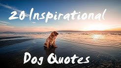 Dog Quotes - Inspirational Dog Quotes