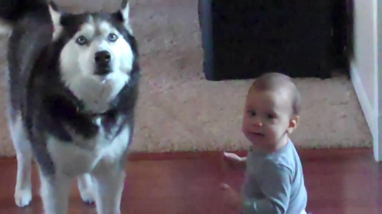 Husky Sings With Baby Youtube