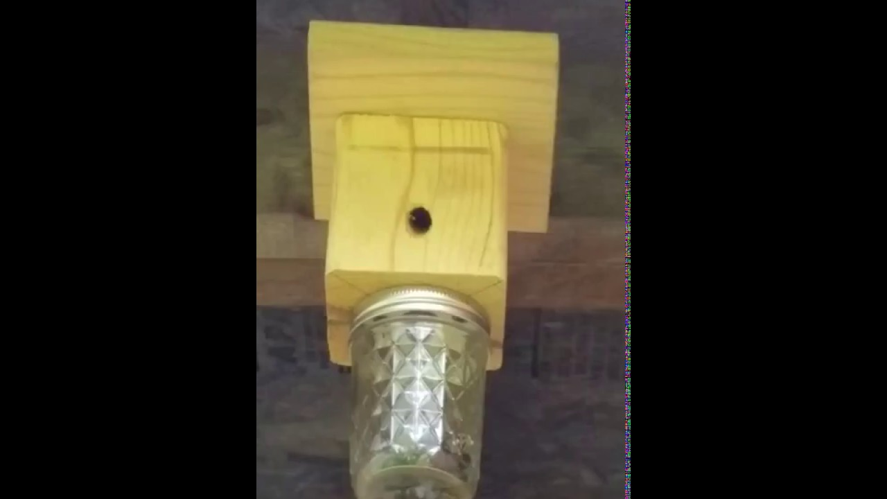 Carpenter Bee Trap Read Below For Instructions