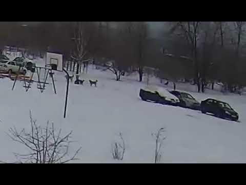 В Тольятти стая собак напала на ребенка