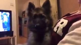 """#SCHOCK#""""  Video Hund Beißt Hand ab  -.-"""