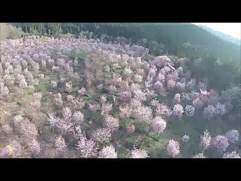 『桜峠』福島県耶麻郡北塩原村 空撮 2014.5.2 - YouTube