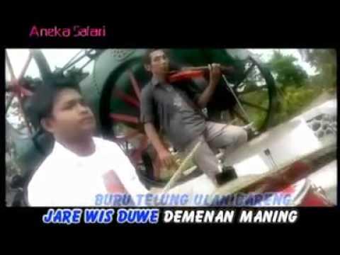 Banyuwangi folk songs ( Mentolo )