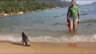 Repeat youtube video A história do pinguim que volta todo ano ao Brasil
