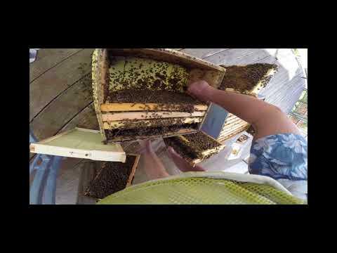 Working backyard bees barefoot