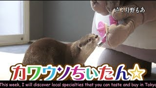 CHI-TAN☆ the otter goes! Discover real Japan〜カワウソちぃたん☆が行くホントの日本 第29回〜