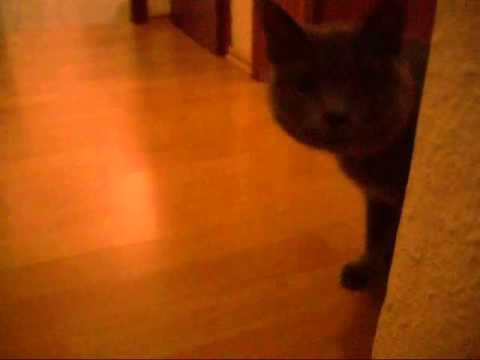 Scaring the Cat