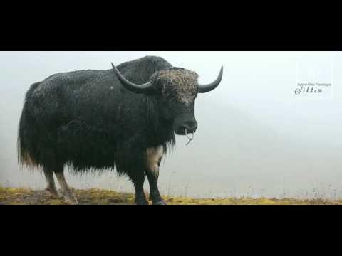 Sonam Diki's Travelouge: Sikkim