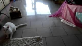 Katze mit Maus am spielen