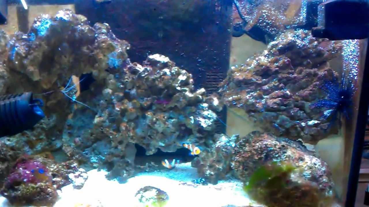 Acquario marino di 4 mesi youtube for Acquario marino
