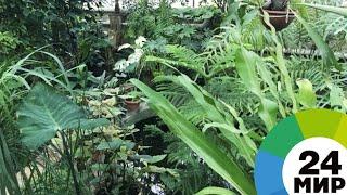 Садовод из Таджикистана открыл уникальный ботанический сад - МИР 24