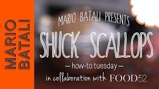 Mario Batali's How-to Tuesday: Shuck Scallops