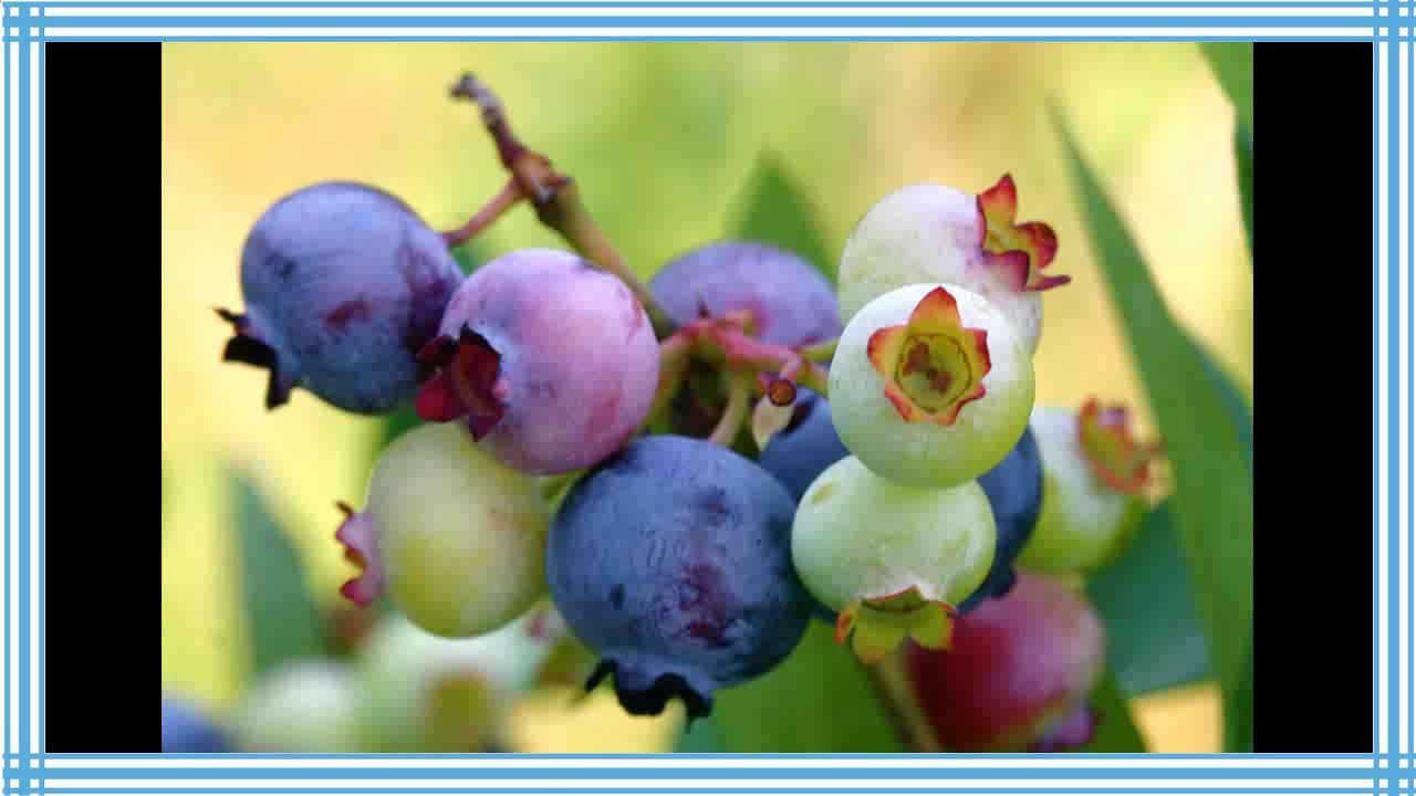 Frutos secos engordan o adelgazan