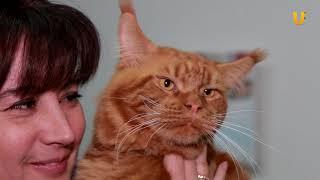 """Глазами животных #318. Выставка кошек """"Мир! Мяу! Май!"""""""