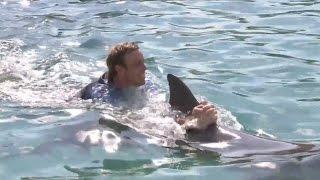 Swimming With Dolphins, The Dark Secrets Surrounding Dolphins