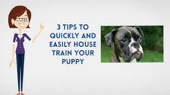 How To Potty Train A Boxer Puppy Dog |  House Train A Boxer Puppy Fast