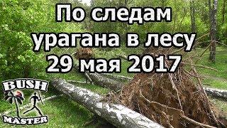 По следам урагана в лесу 29 мая 2017