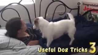 clip hay và cảm động chú chó chăm sóc cô chủ hàng ngày