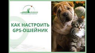 Настройка GPS ошейника для кошек и собак