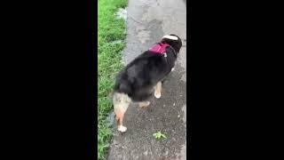 Bryer dog Alfonze at PBC South County Dog Park_IMG 6765