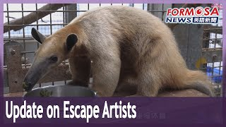 Taipei Zoo's escape artists recovering well