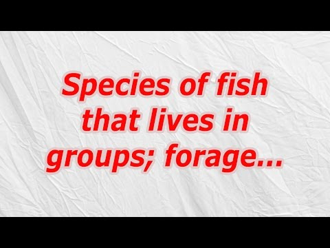 Species of fish that lives in groups; forage (CodyCross Crossword Answer)