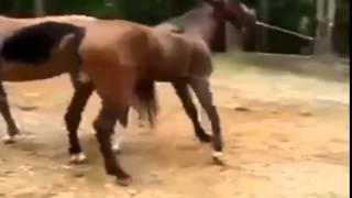 BEST VIDEOS OF ANIMALS КАК СПАРИВАЮТСЯ ЛОШАДИ )) ПРИКОЛ СМЕХ ЮМОР 2015_14.07.2015.MP4