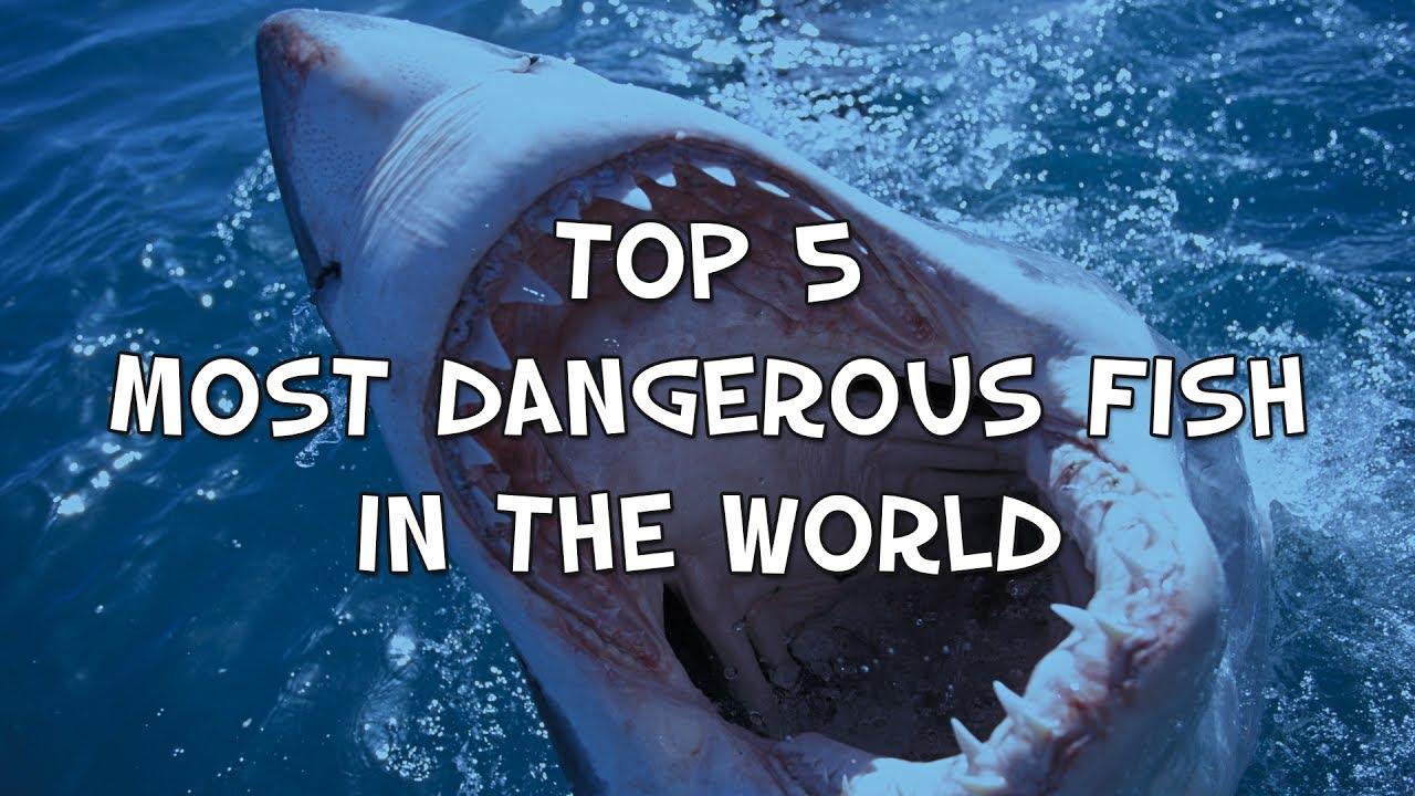 Top 5 Most Dangerous F...