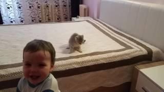 Котёнок нападает