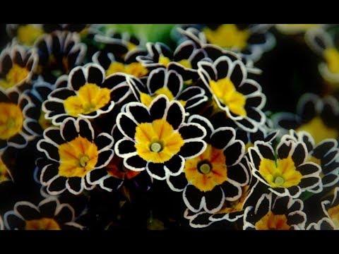 ЦВЕТЫ ПАМЯТИ! Растения, Которые Обязательно НУЖНО Посадить НА МОГИЛЕ!