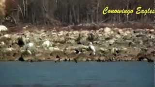 Conowingo Eagles - HD Video