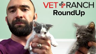 Sick Puppies and Kittens Everywhere! This week on VET RANCH ROUNDUP!