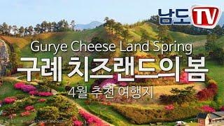 [남도TV]  구례 치즈랜드의 봄   지리산호수공원  …