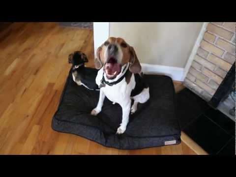 dog-bed-testimonials---p.l.a.y.s-durable-dog-beds-are-a-hit
