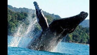 Avistamiento de ballenas jorobadas en la Costa Pacífica de Tumaco es un éxito