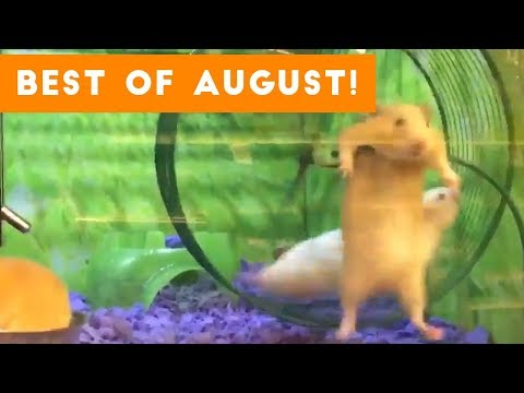 Funniest Pet Reactions & Bloopers of August 2017 | Funny Pet Videos