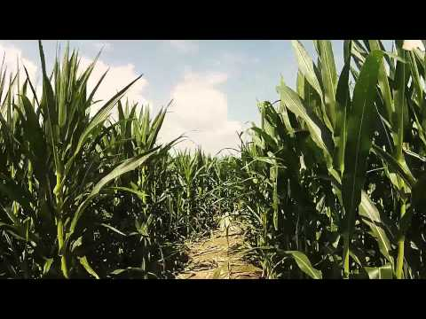 Corn Maze Promo 1 by Flyral.co