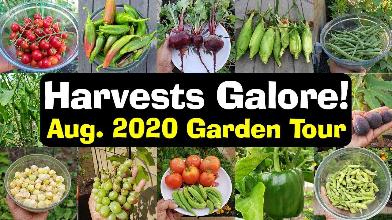 Full August 2020 California Garden Tour, Harvests, Gardening Tips & More!