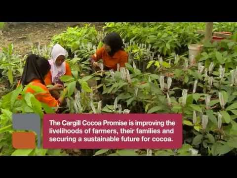 What brings food security to Indonesia cocoa farmers?