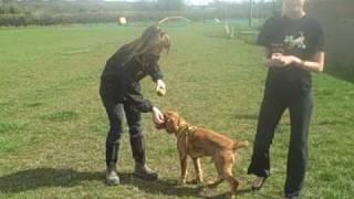 Dogs Trust West London - Ollie The Cocker Spaniel!
