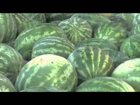 Growing Arizona Watermelon