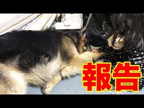 告知・冬路の犬連れ旅・茨城県・千葉県・車中泊