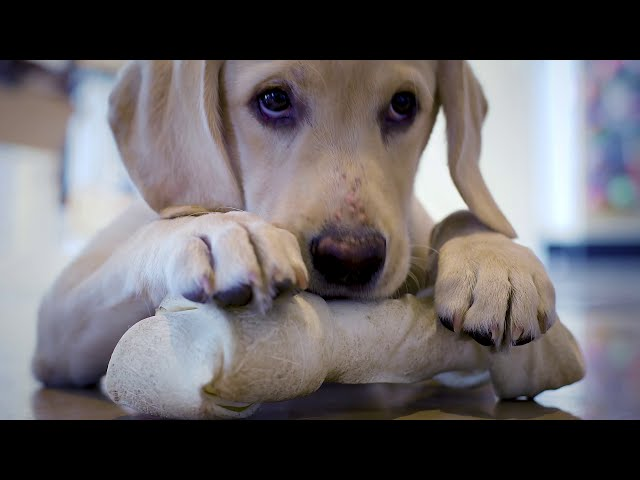Exceptional Pets - Barley - Vet Care
