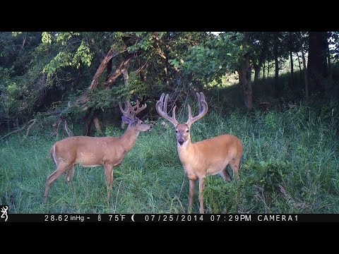 Game Camera Secrets for Deer Hunting Success