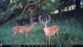 Deer Talk Now: Great Game Camera Secrets for Deer Hunting Success
